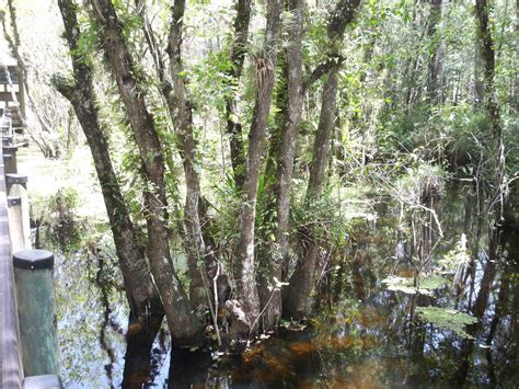 trees archives page 2 of 2 wetlands in florida