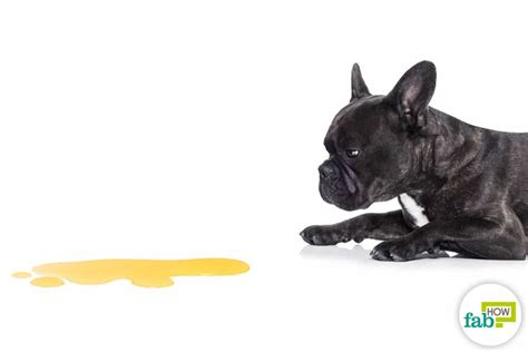 frequent in puppies 5 effective home remedies to treat bladder infection in dogs fab how