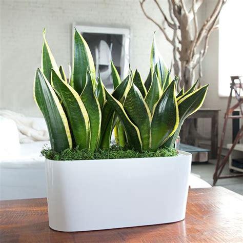 come curare piante da appartamento piante da appartamento come scegliere piante da interno