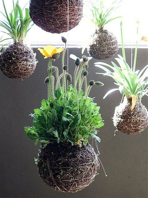 japanese house plants kokedama japanese string plants beautiful home and garden