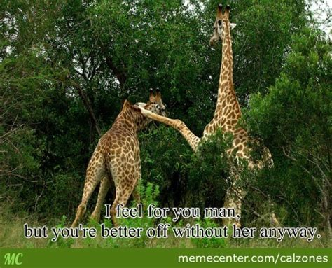 Giraffe Hat Meme - giraffe memes best collection of funny giraffe pictures