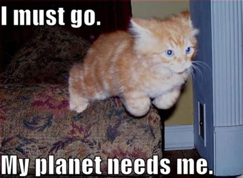 Kitten Meme - my favorite cat memes fimfiction