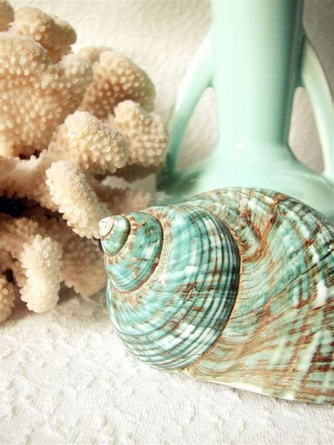 seashell color 1000 images about amazing sea shells on sea