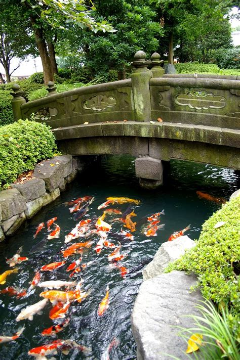 koi pond bridge koi pond koi ponds pinterest