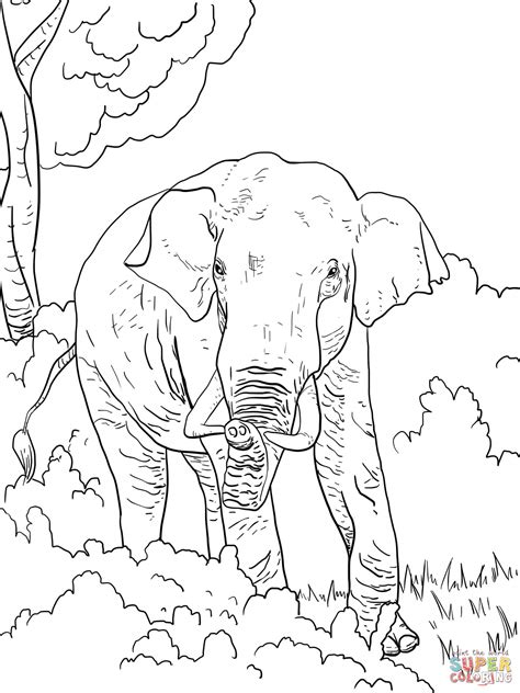 india elephant coloring page indian elephant coloring page free printable coloring pages