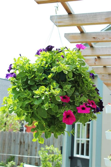 Hanging Flower Basket how to plant a professional looking hanging flower basket