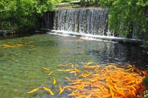 breathtaking koi fish ponds qnud