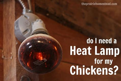 heat l bulb for chickens 17 best images about chickens on pinterest the chicken