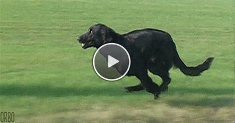 how fast do dogs run fast gifs