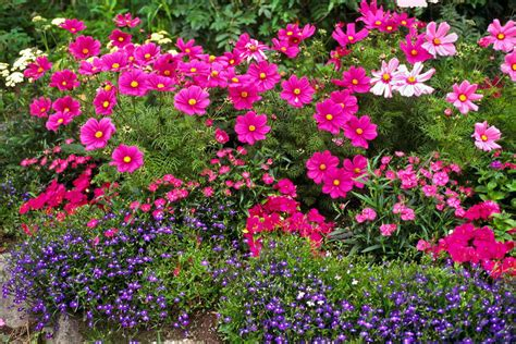 Purple Flower Garden Flower Garden In Pink And Purple By Sally Weigand
