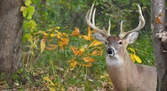 Galerry maine deer hunt