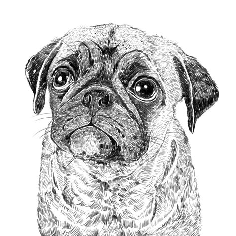 pug prints pug print by ros shiers notonthehighstreet