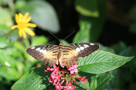Uf Butterfly Garden by Butterfly Rainforest Gainesville Fl Hours Address