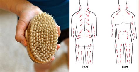 Lymphatic Detox Brush by Skin Brushing For Detoxifying The And Smooth Skin