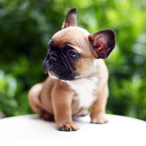 imagenes de animales lindos y tiernos los 20 perritos m 225 s tiernos y peque 241 os que jam 225 s hayas visto