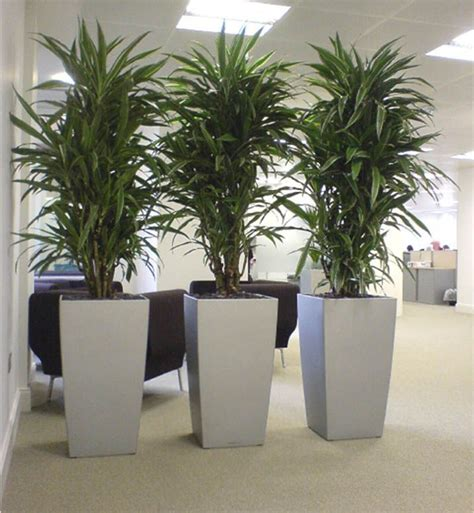 Planters Awesome Extra Large Planter Extra Large Planter Large Indoor Planter