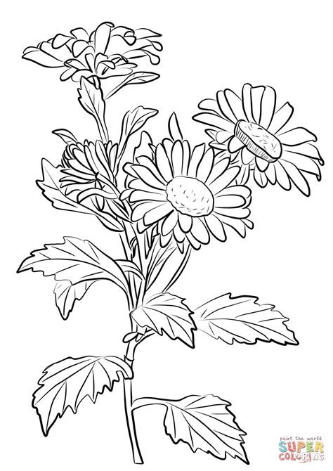 chrysanthemum coloring page free printable coloring pages