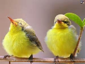 birds wallpaper 86
