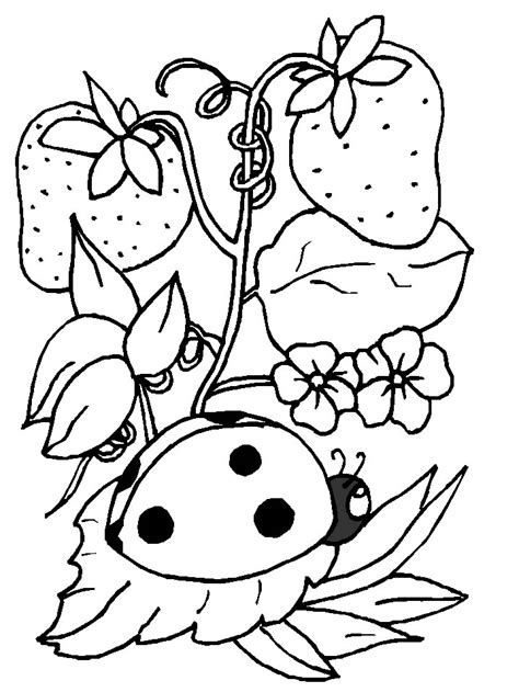 coloring pages of ladybirds ladybirds coloring pages