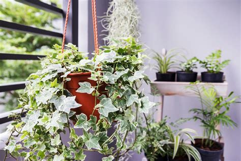 indoor plants  light hgtv