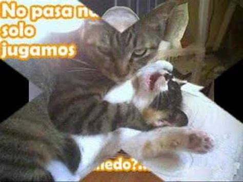 imagenes graciosasde animales la fotos animales mas graciosas de la we youtube