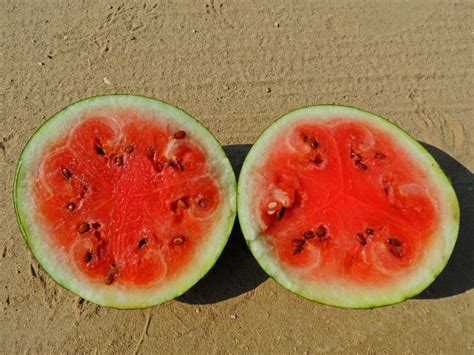 In Watermelon Sugar 1 quotes in watermelon sugar quotesgram