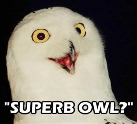 Superb Owl Meme - 17 images about let me tell you bout the birds on