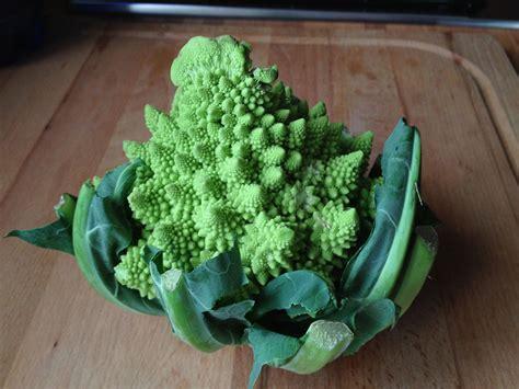 come cucinare i broccoli siciliani ricette con broccoletti romani