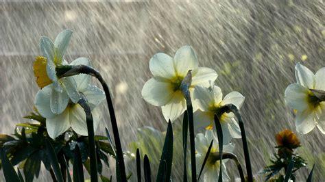 imagenes de lluvia wallpaper lluvia wallpaper wallpaper lluvia 619737