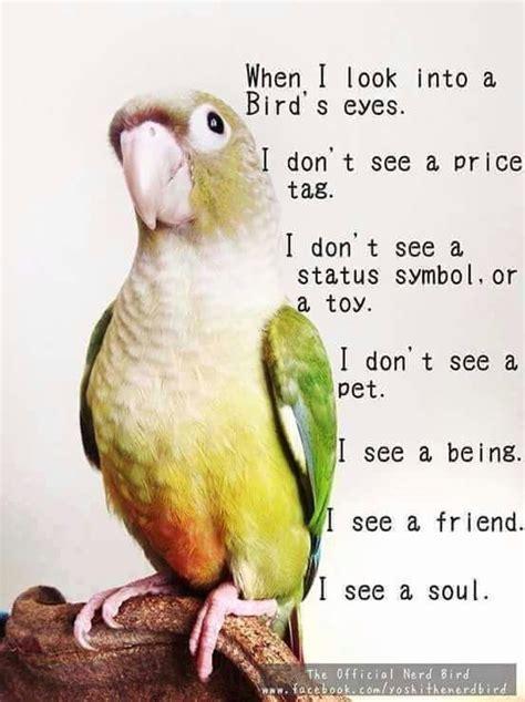 best 25 parrots ideas on pinterest