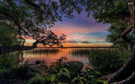 lake shore trees plants sunset wallpapers lake shore