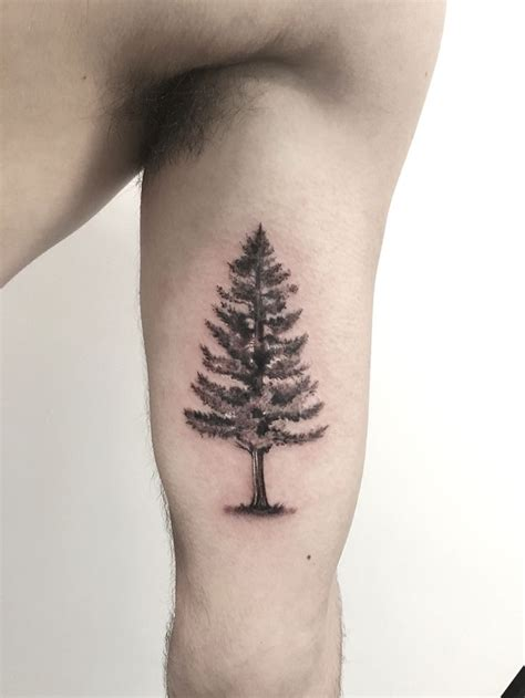 fir tree tattoo pine tree tattoos pine tree