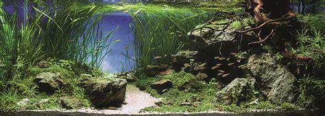 Ada The International Aquatic Plants Layout Contest 2015 international aquatic plants layout contest 2014 ada