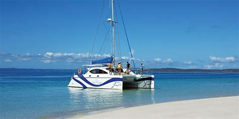 blue dolphin boat tours whale watching hervey bay fraser island