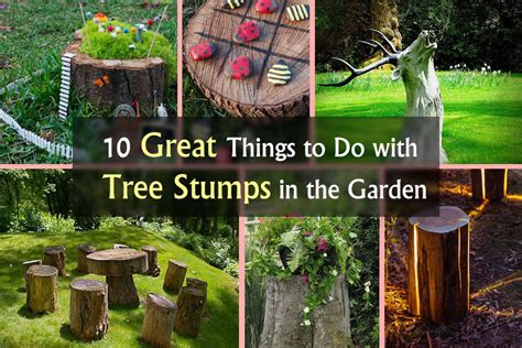 what to do with in backyard 10 amazing tree stump ideas for the garden balcony