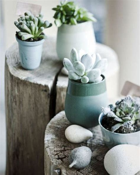 Cactus Planter Ideas by 35 Awesome Succulents Garden Ideas Home Design And Interior