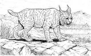 free lynx coloring pages