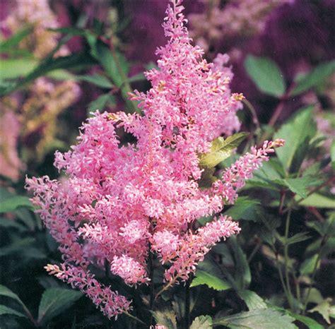 Fleurs Qui Resistent Au Vent by 12 Vivaces Sans Entretien Qui Fleurissent Tout L 233 T 233