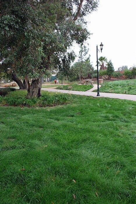 eco backyard farm wildflower farm s eco lawn grass seed 5lb bag eartheasy