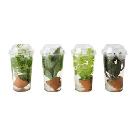 piante acquatiche in vaso vattenrall pianta acquatica ikea