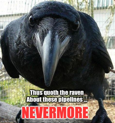 Raven Meme - image tagged in raven imgflip