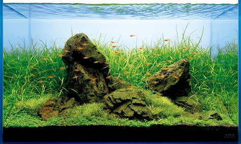 aquascaping rocks for sale aquascape series t a g