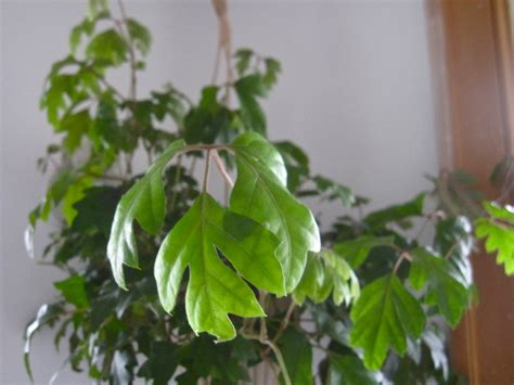 plants that grow in low light houseplants wendy world
