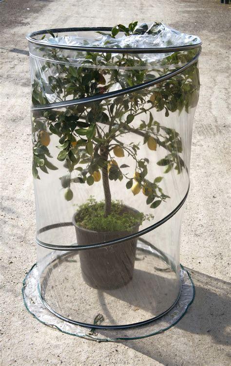 serra per limone in vaso serra citrus pop up hortilus garden center