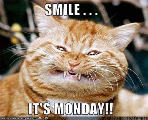 Monday Meme Funny - best 25 happy monday funny ideas on pinterest start