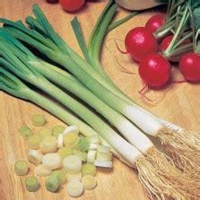Benih Bawang Kucai benih garlic chives bawang kucai