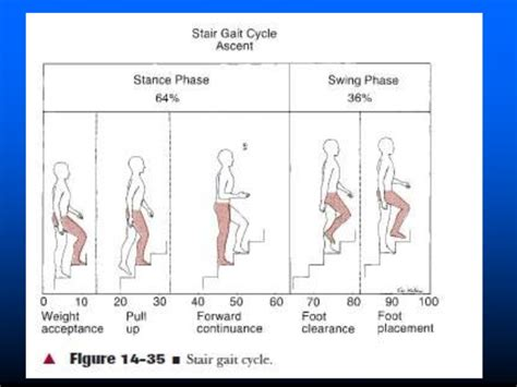 gait pattern types human gait