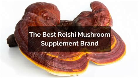 best reishi what is the best reishi supplement brand in 2017