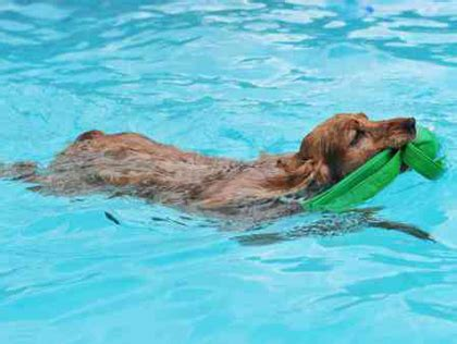 best swimming dogs best places where dogs can swim in pittsburgh 171 cbs pittsburgh