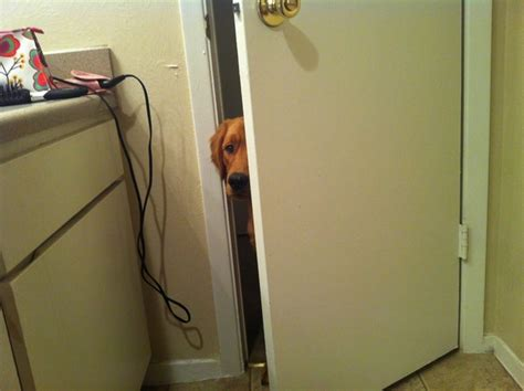 people using the bathroom trying to teach my dog to not come inside the bathroom